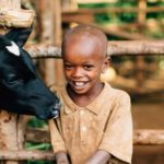 Image of a child feeding a cow